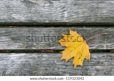 Yellow leaf on the planks - stock photo