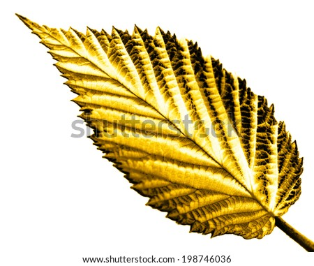 yellow leaf on white background - stock photo