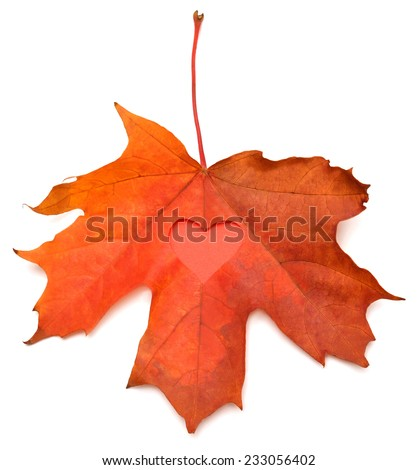 Yellow leaf with a heart isolated on white background - stock photo