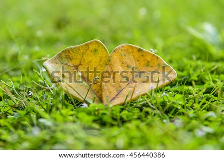 Yellow leaves abstract background, bright field with sunlight, beautiful nature at spring, soft focus, ecology and energy concept - stock photo
