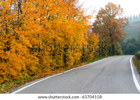 Yellow leaves and colored ina road in autumn