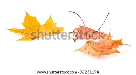 yellow leaves on a white background - stock photo