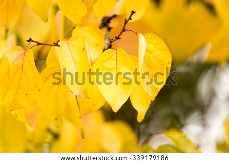 yellow leaves on the tree in autumn