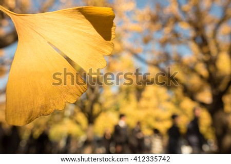 Yellow leaves were Jingu Outer Gardens of the ginkgo tree-lined