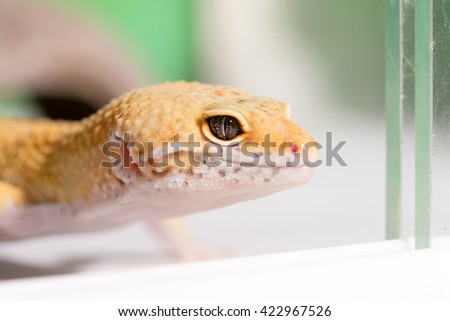 Yellow lizard on driftwood in the terrarium - stock photo