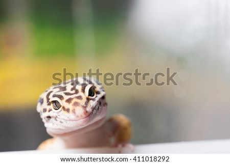 Yellow lizard with black spots - stock photo