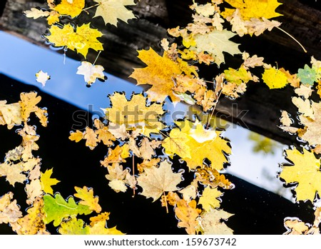 Yellow maple and oak leaves on the water - stock photo