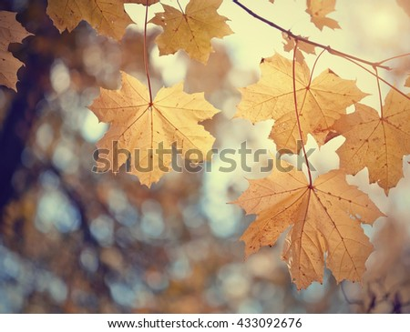 Yellow maple autumn leaves against the sky. - stock photo