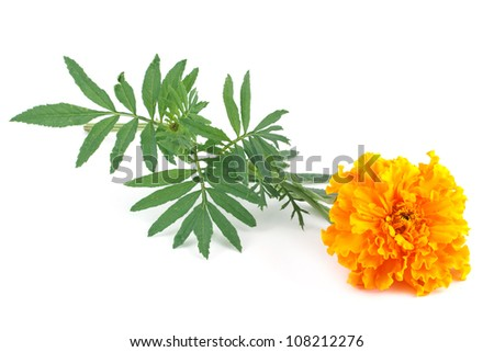 yellow marigold flower isolated on white - stock photo