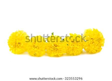 yellow marigold on a white background - stock photo