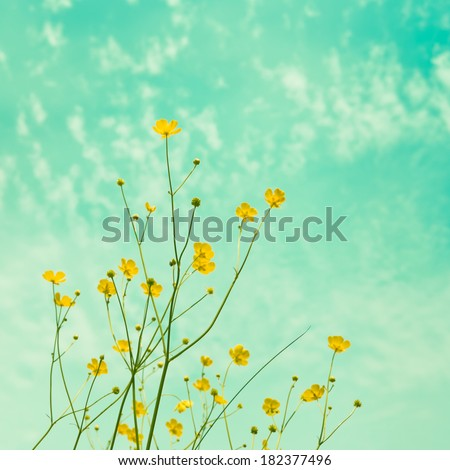 Yellow meadow florets against the sky. Added instagram effect - stock photo