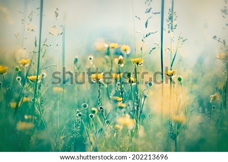 Yellow meadow flowers in meadow - stock photo