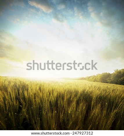Yellow meadow under sky with clouds  - stock photo