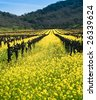 Yellow mustard bloom in the Californian wine country. - stock photo