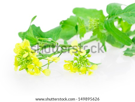 yellow mustard flowers on a branch - stock photo