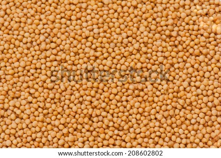 Yellow Mustard Seeds - stock photo