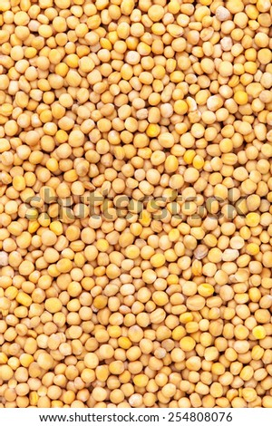 Yellow mustard seeds for backgrounds or textures - stock photo