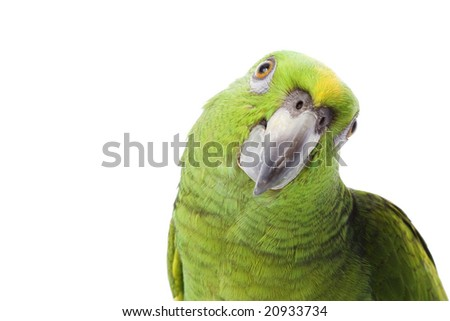 Yellow-naped Amazon Parrot (Amazona auropalliata) on white background.
