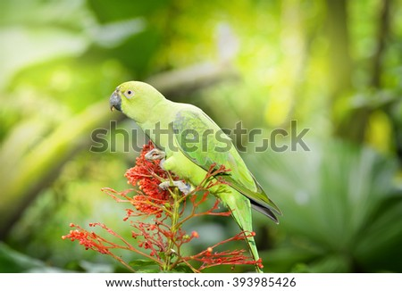 Yellow-naped parrot, selective focus.