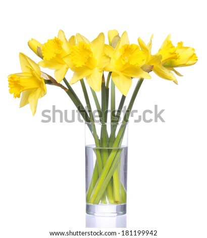 Yellow narcissus in transparent vase, isolated on white. Spring Yellow Flowers