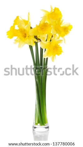Yellow narcissuses in the transparent vase, isolated on white