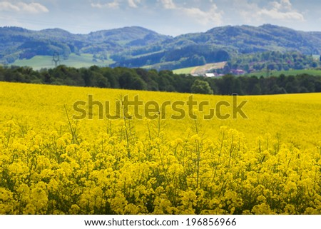 Yellow oilseed rape field with mountains in the background - stock photo
