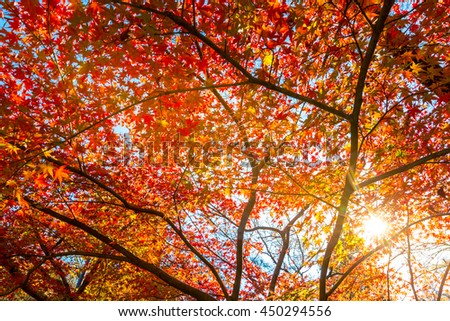 Yellow, orange and red autumn leaves in beautiful fall park. - stock photo
