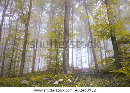 Yellow orange colored leaves in seasonal forest tree landscape.