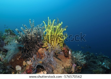 Yellow orange sea lily surrounded by underwater life in deep blue. Tropical colorful underwater coral reef with beautiful color plants.
