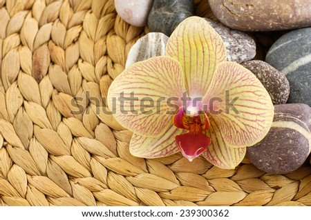 Yellow orchid flower and stones on woven mat