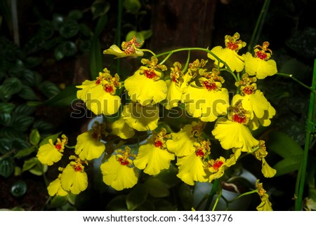 Yellow Orchid flowers close-up in the botanical garden. Lifestyle , wellness, romance, and fragrance concept. Selective focus. - stock photo