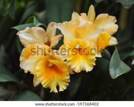 Yellow orchid flowers on white background stock photo royalty free yellow orchid flowers on white background mightylinksfo