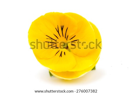 yellow pansies on a white background - stock photo
