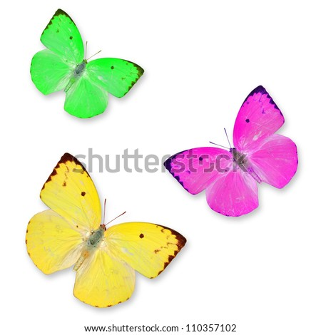 Yellow pink and Green butterflies isolated on white with soft shadow beneath each - stock photo