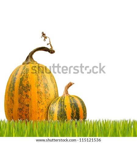 yellow pumpkin on white background - stock photo