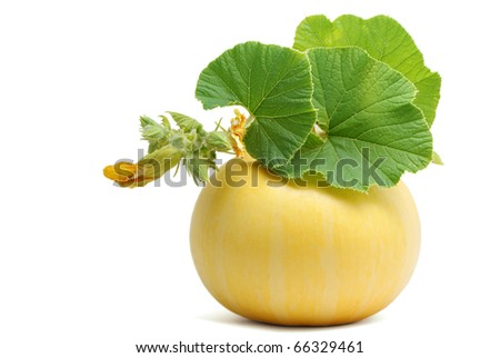 Yellow pumpkin with leaves isolated on white background - stock photo