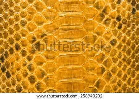 Yellow python  leather, skin texture for background. - stock photo