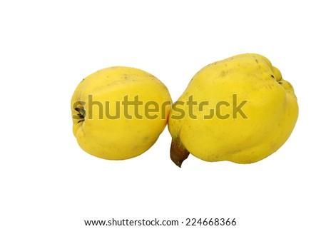 Yellow quince - stock photo