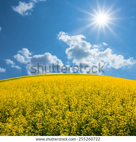 yellow rape field under a sparkle sun - stock photo