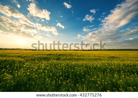 Yellow rape field with blue sunset sky