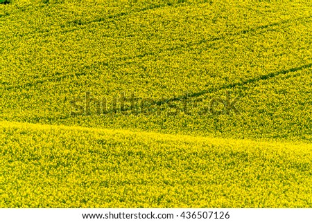 Yellow rape hills in South Moravia, Csezh Republic - stock photo