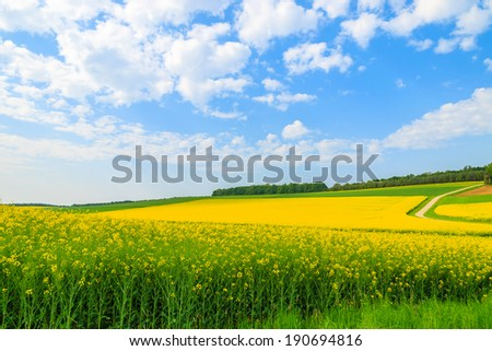 Yellow rapeseed flower field and blue sky, Burgenland, southern Austria