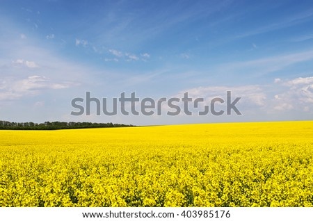 Yellow rapeseed flowers on field with blue sky and clouds before tree line against, Ukraine, copyspace. - stock photo