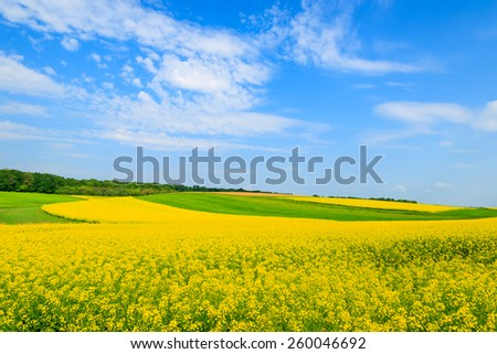 Yellow rapeseed flowers on field with blue sky and clouds, Burgenland, Austria - stock photo