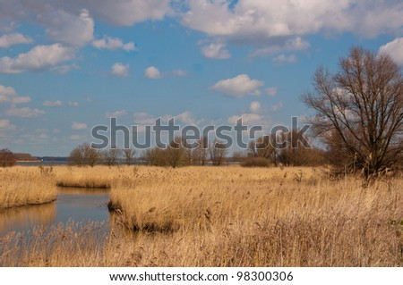 Yellow reeds along a small creek  in a Dutch nature reserve. - stock photo