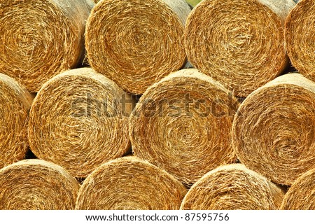 Yellow rolls of straw in the end of summer - stock photo