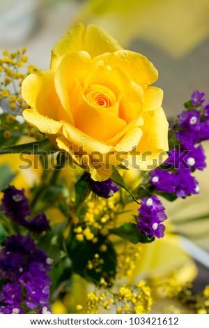 Yellow rose - stock photo