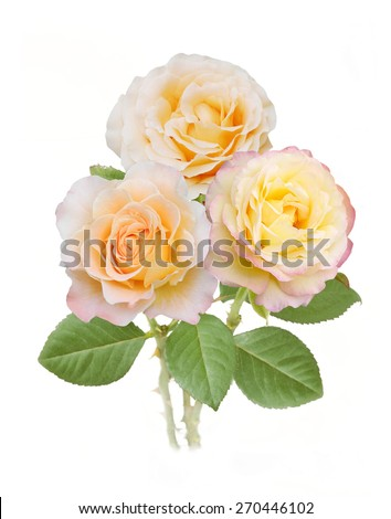 Yellow rose bunch isolated on white background - stock photo