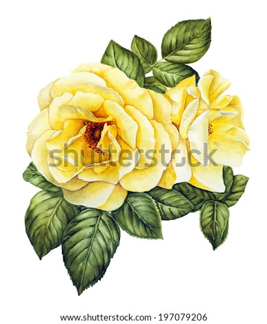 Yellow rose flower watercolor - stock photo