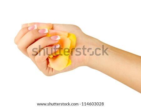 Yellow rose petals with woman's hand on white background